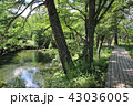 初秋の奥日光戦場ヶ原湯川遊歩道 43036005