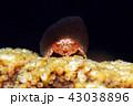 水中 海中 水中写真の写真 43038896