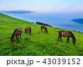 都井岬 夜明け 御崎馬の写真 43039152