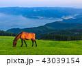 都井岬 夜明け 御崎馬の写真 43039154