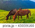 都井岬 夜明け 御崎馬の写真 43039160