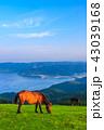 都井岬 夜明け 御崎馬の写真 43039168
