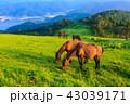 都井岬 夜明け 御崎馬の写真 43039171