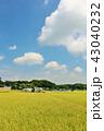 青空 秋 秋晴れの写真 43040232