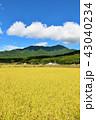 青空 秋 秋晴れの写真 43040234