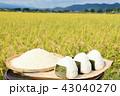 田んぼ 稲穂 米の写真 43040270