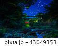 ホタル ゲンジボタル 夜の写真 43049353