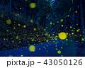 ヒメボタル ゲンジボタル 光の写真 43050126