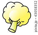 カリフラワー 野菜 ベクターのイラスト 43058352