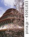 天元宮 桜 花の写真 43061833