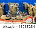 鵜戸千畳敷奇岩 鵜戸神宮 神社の写真 43065234