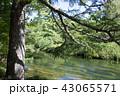 初秋の奥日光湯川 43065571
