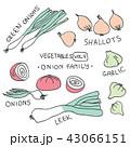 玉葱 野菜 長ねぎのイラスト 43066151