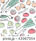 玉葱 野菜 にんにくのイラスト 43067054