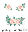 薔薇 バラ 花のイラスト 43067132
