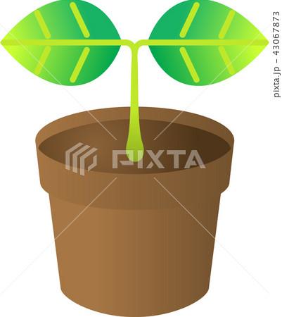 観葉植物 (室内用)ベクターイラスト 43067873