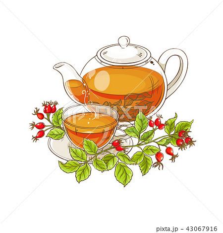 wild rose tea illustration 43067916