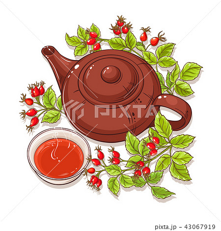 wild rose tea illustration 43067919