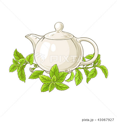 stevia tea illustration 43067927