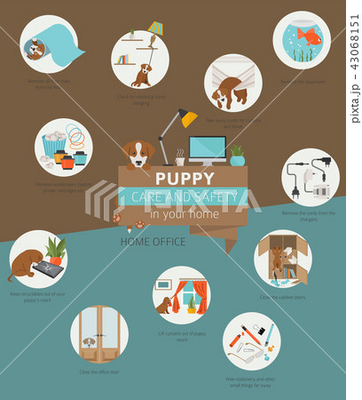 Puppy care and safety in your home. Home office 43068151