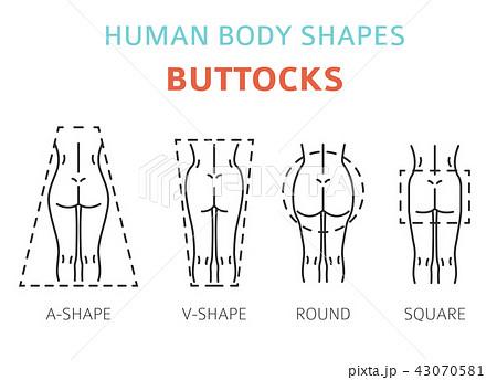 Human body shapes. Woman buttocks types set 43070581
