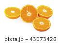 オレンジ オレンジ色 橙の写真 43073426