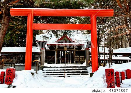 冬の札幌伏見稲荷神社の拝殿 43075397