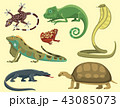 Reptile and amphibian colorful fauna vector illustration reptiloid predator reptiles animals. 43085073