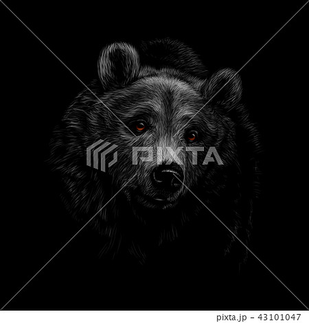 Portrait of a brown bear head on a black background. 43101047