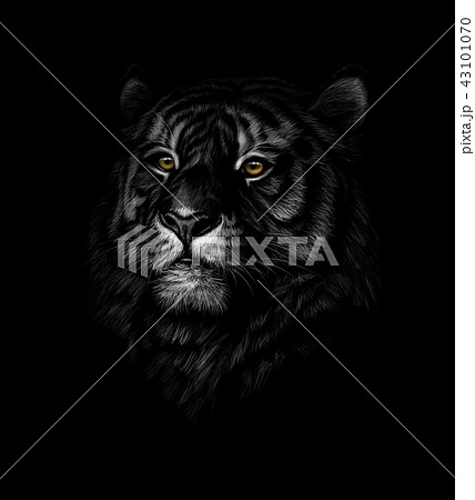 Portrait of a tiger head on a black background 43101070