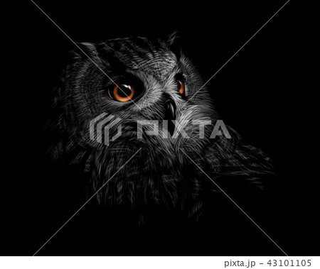 Portrait of a long-eared owl on a black background 43101105