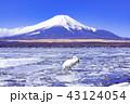 富士山 山中湖 冬の写真 43124054