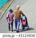 爺婆と孫の散歩 43124836