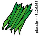 さやインゲン いんげん豆 ベクターのイラスト 43126868