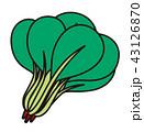 小松菜 葉野菜 葉っぱのイラスト 43126870