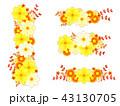 キバナコスモスと秋の菊のフレーム 43130705