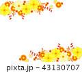 キバナコスモスと秋の菊のフレーム 43130707