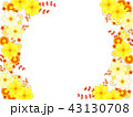 キバナコスモスと秋の菊のフレーム 43130708