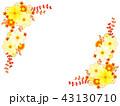 キバナコスモスと秋の菊のフレーム 43130710