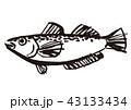 鰰 はたはた 魚のイラスト 43133434