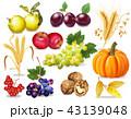 くだもの フルーツ 実のイラスト 43139048