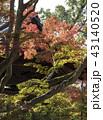 紅葉 モミジ 黄葉の写真 43140520