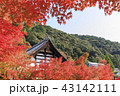 永観堂 紅葉 秋の写真 43142111