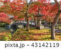 京都・禅林寺・永観堂の紅葉 43142119