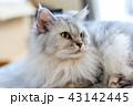 シニア猫 16歳 43142445