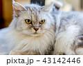シニア猫 16歳 43142446