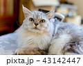 シニア猫 16歳 43142447