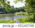 川 柿田川 湧水の写真 43145746