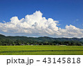 田園風景と夏空 43145818