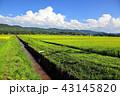 田園風景と夏空 43145820